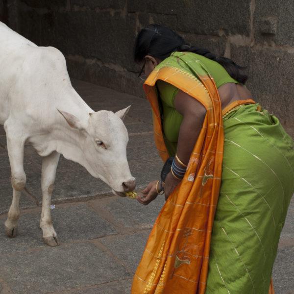 India: Goa e Karnataka settentrionale